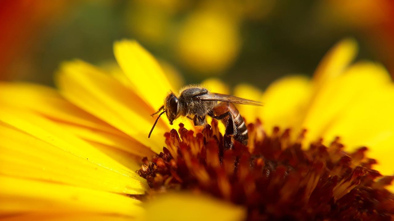 Taller de Creatividad en Familia 'Paciencia con la abeja' en Aprendiver Salamanca (Salamanca)