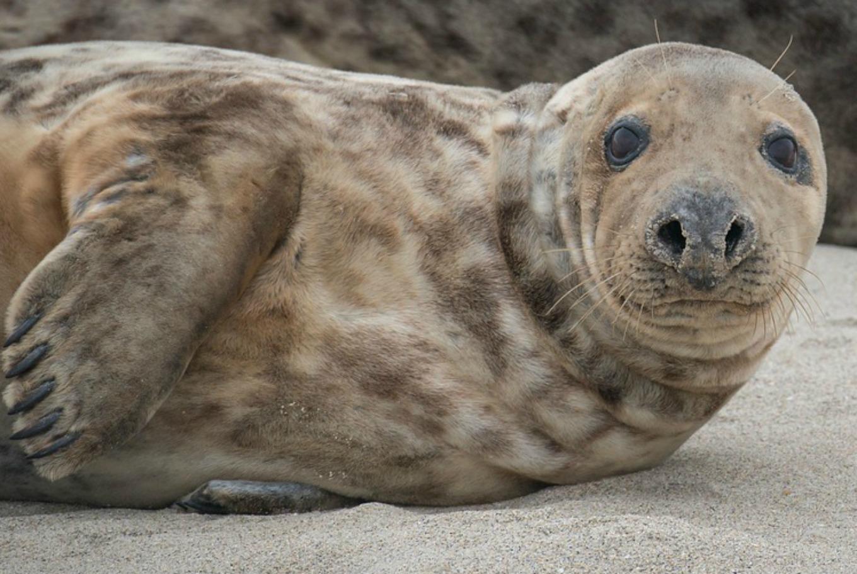 Aventura con las focas en Aquarium Finisterrae (A Coruña)