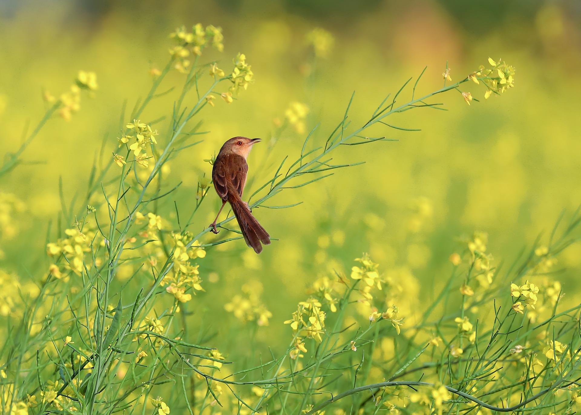 Actividad familiar 'Descubre las aves de Mar de Montígola y Jardines de Aranjuez' en SEO Birdlife (Zaragoza)