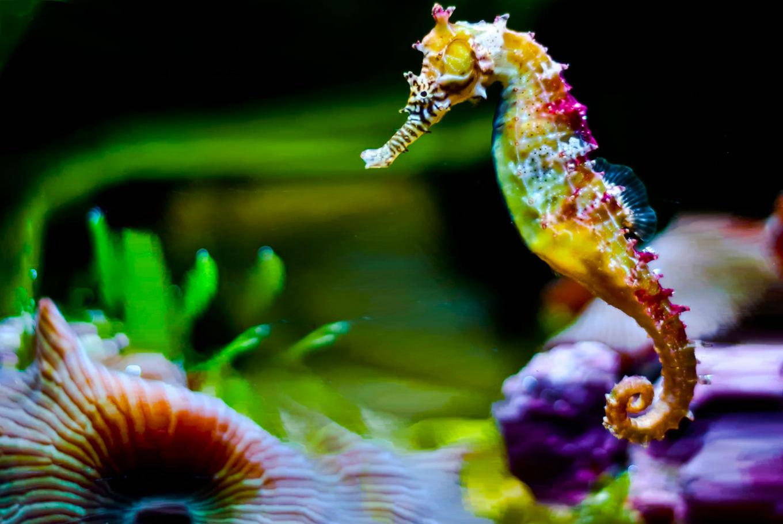 Carnaval en el Aquarium en Aquarium de Donostia (Donostia-San Sebastián)