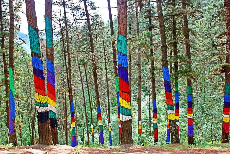 Ruta en familia por un bosque lleno de color en El Bosque de Oma (Kortezubi)