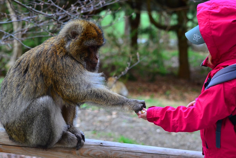 Campamentos de verano en el Zoo en Zoo Aquarium de Madrid (Madrid)