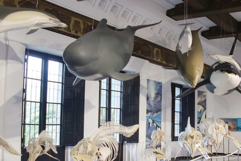 Exposición 'La mar de cetáceos en Andalucía' en Casa de la Ciencia Sevilla (Sevilla)