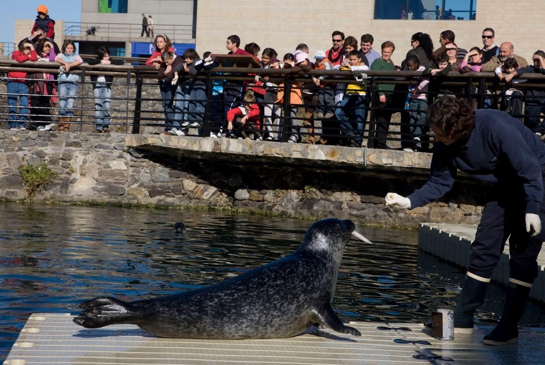 Visita a las focas del Aquarium Finisterrae en Aquarium Finisterrae (A Coruña)