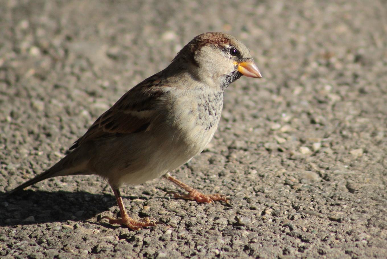 Día Mundial de las Aves en la Dehesa de la Villa en Dehesa de la Villa (Madrid)