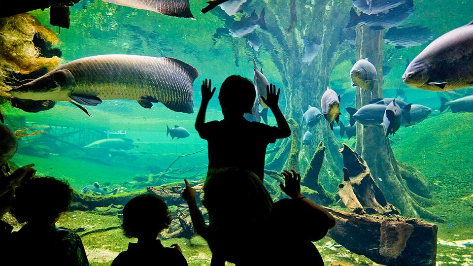 Visita comentada 'Bosque Inundado' en CosmoCaixa Barcelona (Barcelona)