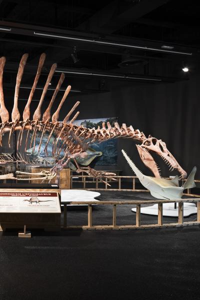 Exposición 'Spinosaurus: el gigante perdido del Cretáceo' en Museu de Ciències Naturals de Barcelona | Museu Blau (Barcelona)