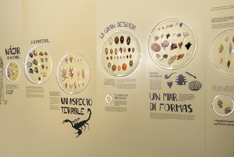 Exposición 'Hola Caracola' en Casa de la Ciencia Sevilla (Sevilla)