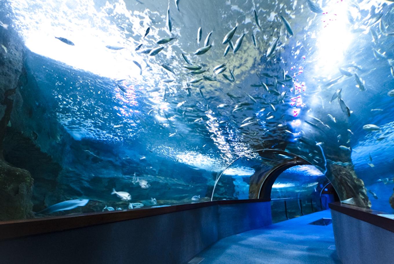 Aquarium de Donostia