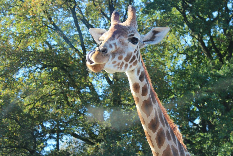 Días de verano entre animales salvajes en el zoo de Barcelona en Parque Zoológico de Barcelona (Barcelona)