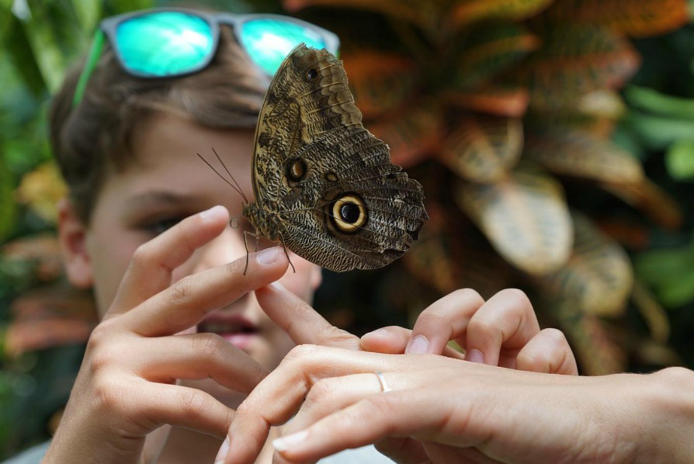 Visitas guiadas al Centro de Mariposas e Insectos en Casa de Campo (Madrid)