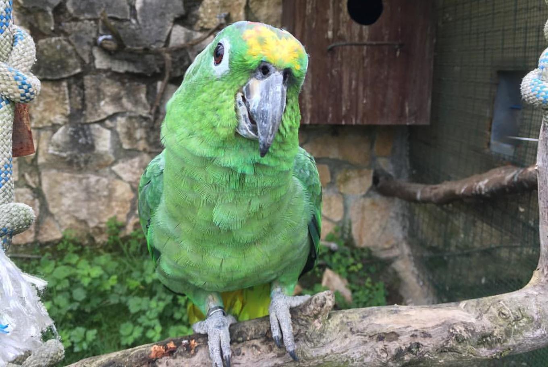 Excursión a El Bosque Zoológico en El bosque Zoológico (Oviedo)
