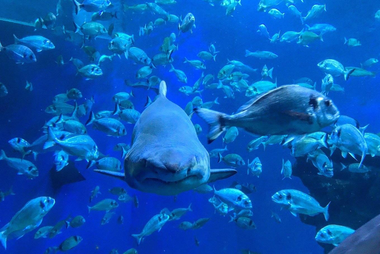 Jornada familiar en el Palma Aquarium en Palma Aquarium (Palma de Mallorca)