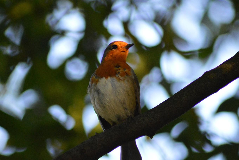 Ruta 'Observando pájaros en la Casa de Campo' en Casa de Campo (Madrid)