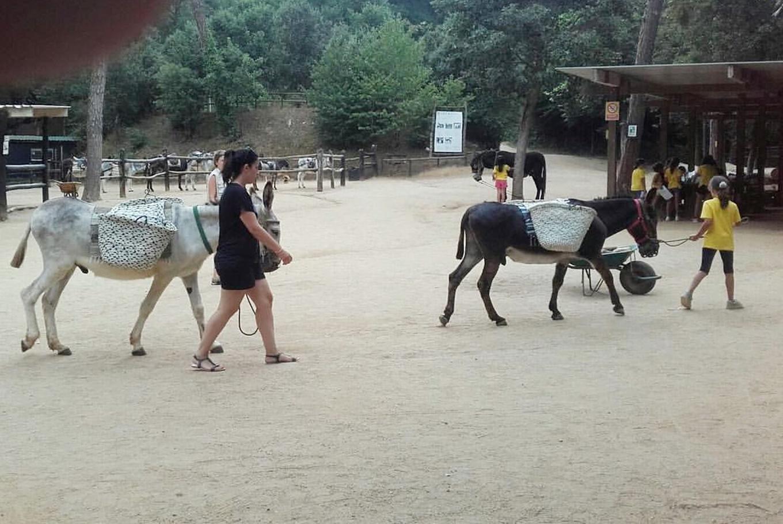 Aventura en burro: ruta infantil en Rukimon (Dosrius)