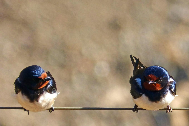 Descubre las aves en la Dehesa de la Villa en Dehesa de la Villa (Madrid)