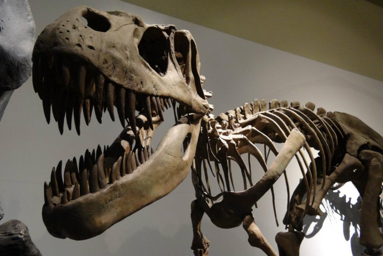 Taller 'Pon cara de dinosaurio' en Museo Nacional de Ciencias Naturales (Madrid)