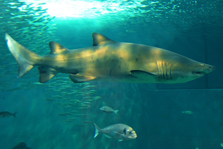 Un día de verano en familia entre 7.000 animales en el acuario de Sevilla en Acuario de Sevilla (Sevilla)