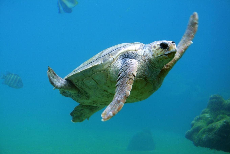 Taller sobre tortugas marinas en Acuario de Sevilla (Sevilla)
