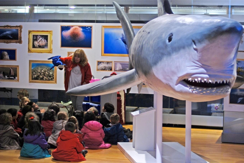 Visita guiada a 'Océanos:la exposición. El último territorio salvaje' en Museo Nacional de Ciencias Naturales (Madrid)